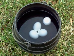 Testing Eggs