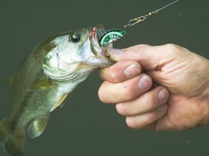 Quick Bottle Cap Lure