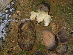"""Mud Spuds"" – Clay Baked Potatoes – 1/22/12"