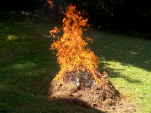 Flash Cooking - Burning Pine Needle Pile