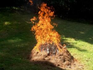 Flash Cooking - Burning Pine Needle Pile