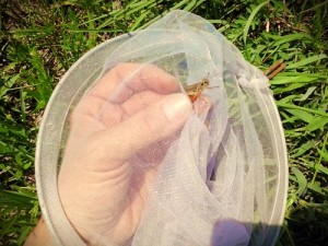 Butterfly/Bug Net – Great For Catching Bait On-The-Fly