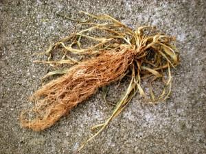Grass Roots As Tinder
