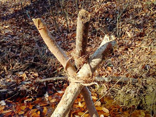 Sapling Root Lashing