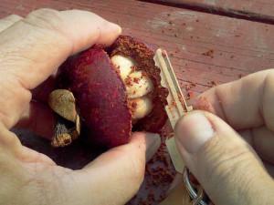 Key Cuts Open Fruit