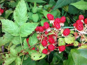 Raspberry Cluster